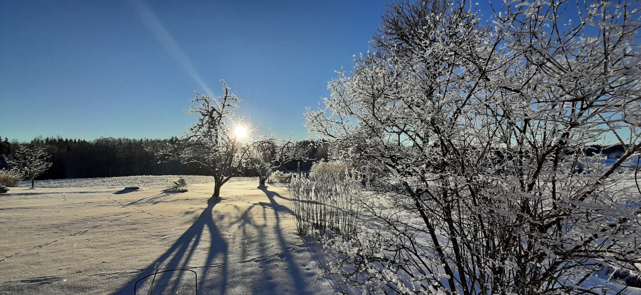 Vinterbild Sätterskog januari 2021